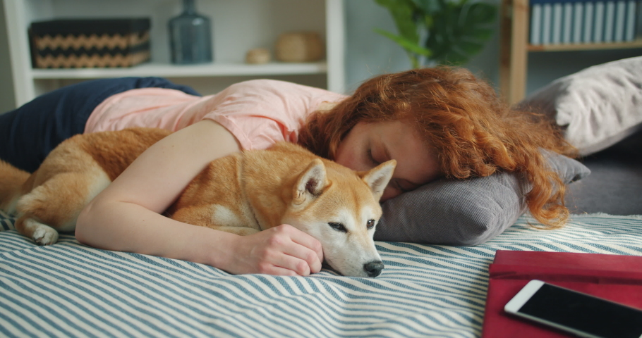 Attractive young woman and cute shiba inu dog are sleeping together at home on bed hugging enjoying relaxation. Humans and animals friendship concept. | Shutterstock HD Video #1033754729