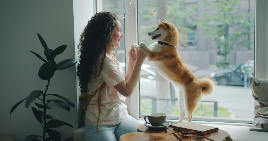 Happy young woman is dancing with pet dog sitting on window sill in cafe having fun enjoying music and animal. Modern lifestyle, people and youth concept. | Shutterstock HD Video #1033754762