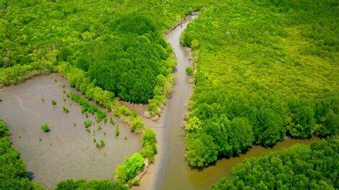 Aerial view, Viewpoint of Mangroves in Tung Prong Thong or Golden Mangrove Field at Estuary Pra Sae, Rayong, Thailand.