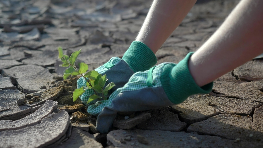 Drought concept: dry cracked soil with green plant. Farmer hands planting young tree in desert, spring . Climate change, environmental disaster, death  plants, soil degradation, desertification, earth | Shutterstock HD Video #1033803011