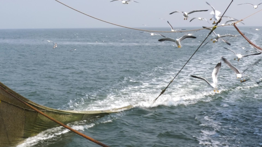 Commercial shrimp fishing boat trawling for crustaceans, SLOW MOTION Royalty-Free Stock Footage #1034256380