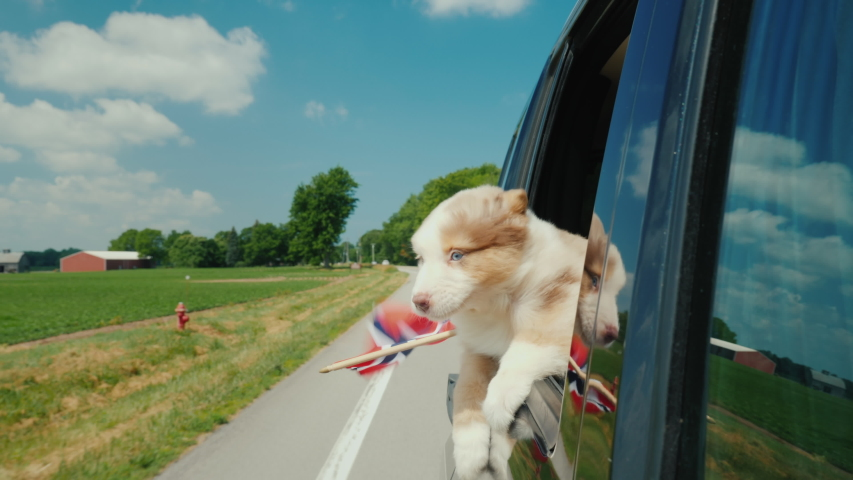 The dog looks out the window of the car, in the paws of her flag of Norway. Travel to the countries of Scandinavia #1034327873
