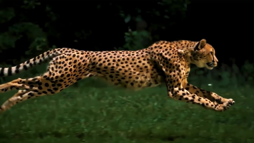 Amazing Cheetah Running Super Slow Motion 4K