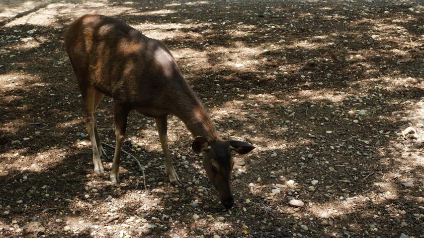 Brown deer wild life animal | Shutterstock HD Video #1034439860