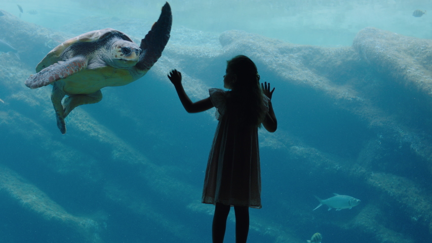Little girl at aquarium watching sea turtle swimming in tank curious child having fun watching fish swimming kid looking at marine life in oceanarium aquatic habitat