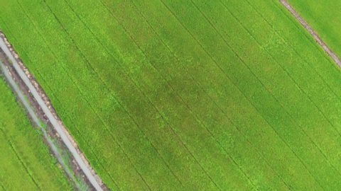 Natural grassland trees, world care concept, explore the grasslands