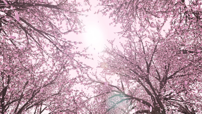 Cherry forest, upward, rotation, loop, pink background