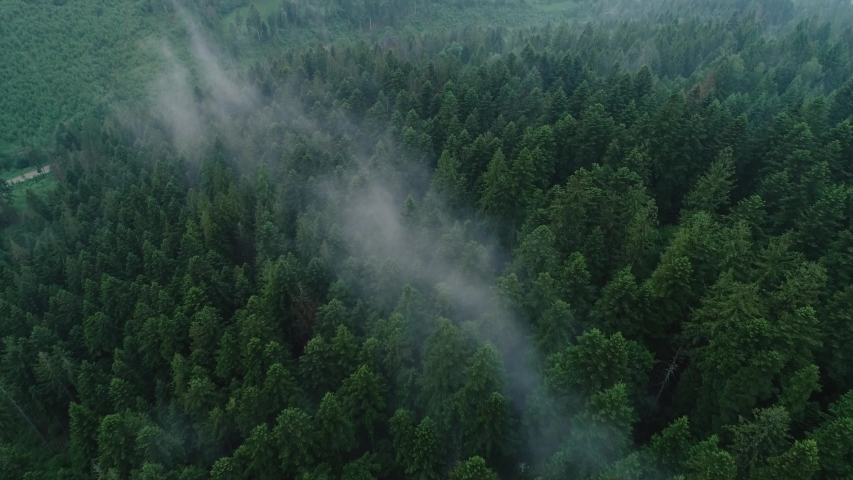 Aerial drone footage of forest mist | Shutterstock HD Video #1034599562