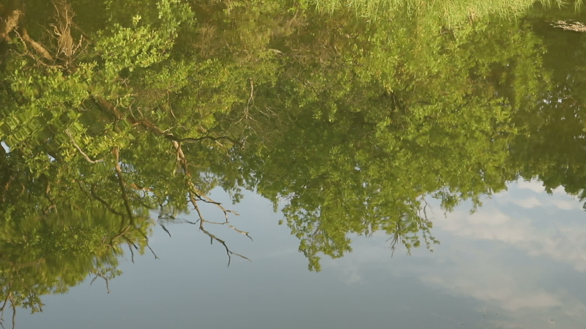 Pond with sunny morning light.  trees reflected in a water. Early morning time. close-up   Shutterstock HD Video #1034769833