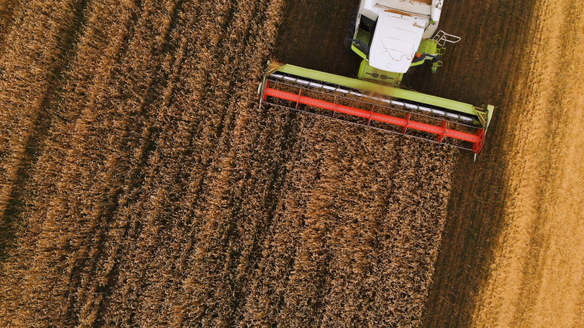 Close-up Aerial view 4k resolution Modern combine harvester collects ripe wheat leaving behind a cloud of dust in a wheat field. View from above