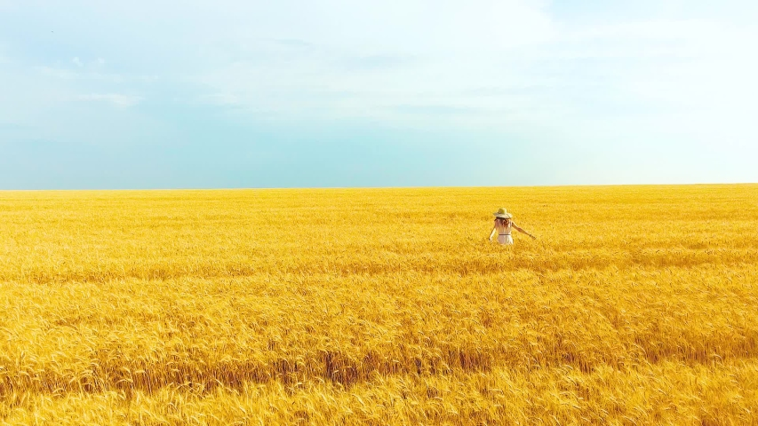 Aerial of woman in big hat jumping and running in golden wheat field in summer | Shutterstock HD Video #1034848280