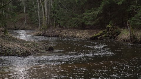 Narrow river flowing in an old grown forest. Fresh spring water stream running trough rooks in the woods.