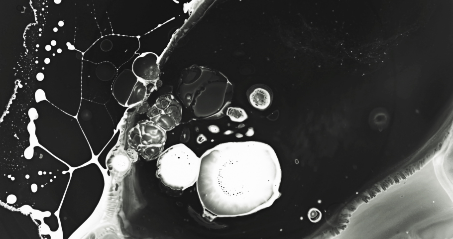 White and black liquid ink / paint drop stain on white paper background / paint bleed Bloom, with circle organic flow expansion, splatter spreading on pure backdrop texture \ petri dish | Shutterstock HD Video #1035029360