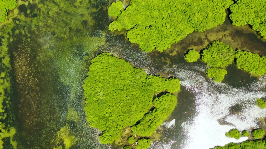 Aerial panoramic mangrove forest view in Siargao island,Philippines. Mangrove landscape | Shutterstock HD Video #1035158915