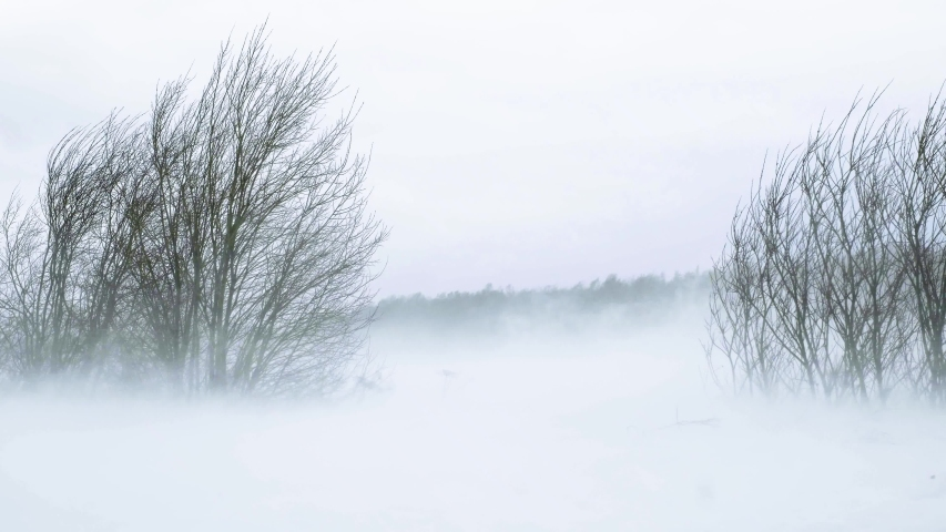 Very strong snowstorm. Snow flies across the field. bushes and grass covered with snow lean from a strong wind. Nothing is visible because of the snow | Shutterstock HD Video #1035203129