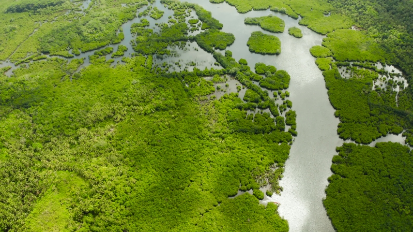 Mangrove green forests with rivers and channels on the tropical island, aerial drone. Mangrove landscape. | Shutterstock HD Video #1035256529