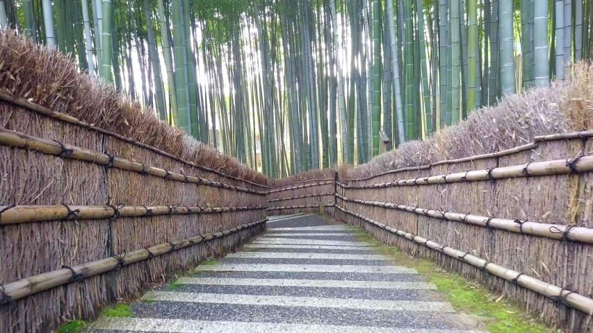 Walkway bamboo tunnel named Arashiyama bamboo forest in Kyoto, Tourist landmark of Japan | Shutterstock HD Video #1035423692