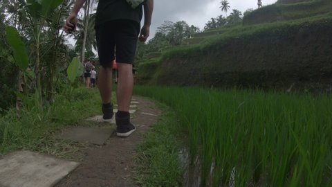 Low angle view following a man walking on a narrow path beside a small rice paddy that is part of the Tegalalang rice terraces in Bali.