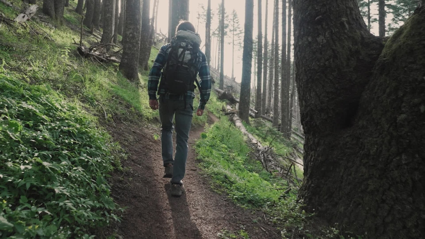 White male hiking on trail up peaceful lush high elevation green forest with sun flares tracking shot from behind | Shutterstock HD Video #1035432203