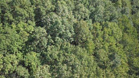 Der Verlust der Biodiversität Biodiversität für Ökosystem-Biologie -  Amazonas Regenwald ökosystem 1649*1016 transparenter Png kostenloser  Download - ökosystem, Anlage, Flora.