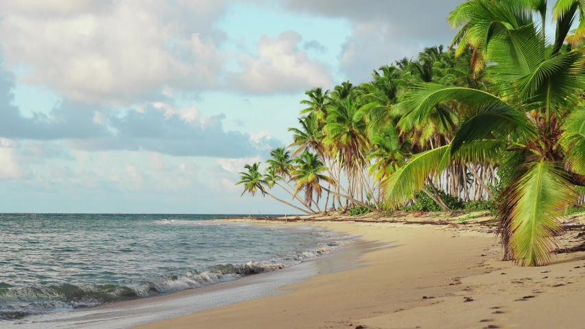 Amazing palm plage. Natural tropical sunset on wild isle. Coconut palm trees stand on the shore of the beautiful Caribbean Sea. #1035560552