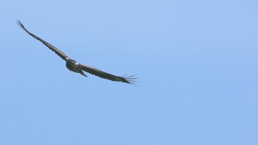 African Fish Eagle flying majestically in slow motion at Lake Naivasha Kenya during a boat safari | Shutterstock HD Video #1035589937