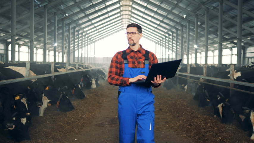 Farm worker uses a laptop while checking cows in a byre.
