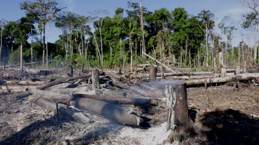 Amazon rainforest burning under smoke in sunny day in Acre, Brazil near the border with Bolivia. Concept of deforestation, fire, environmental damage and crime in the largest rainforest on the planet. | Shutterstock HD Video #1035819863