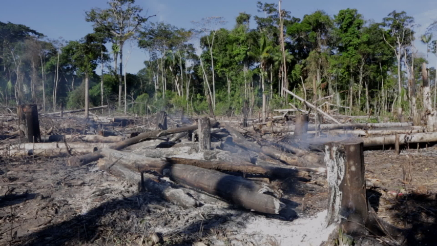 Amazon rainforest burning under smoke in sunny day in Acre, Brazil near the border with Bolivia. Concept of deforestation, fire, environmental damage and crime in the largest rainforest on the planet. | Shutterstock HD Video #1035819872