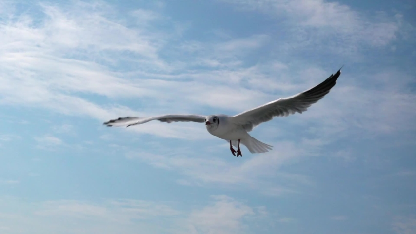 Seagull flying against the blue sky.  symbol of freedom. Big seagull soaring over the Mediterranean sea. Greece. Slow motion. HD