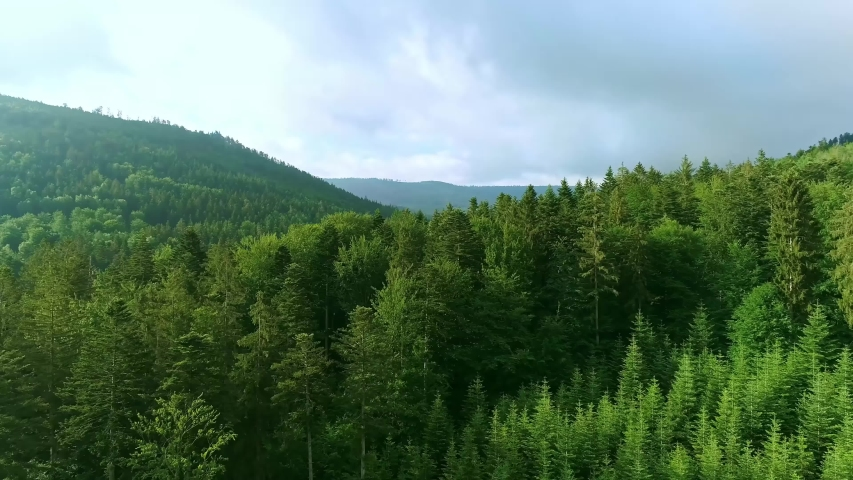 4K UHD: Arial Drone shot. Birds eye view of a lush green forest. Lush green tree tops.Aerial View Treetops In The Forest .Treetops In The Pine Rain Forest. Top Down Flyover Shot of Winter Spruce.