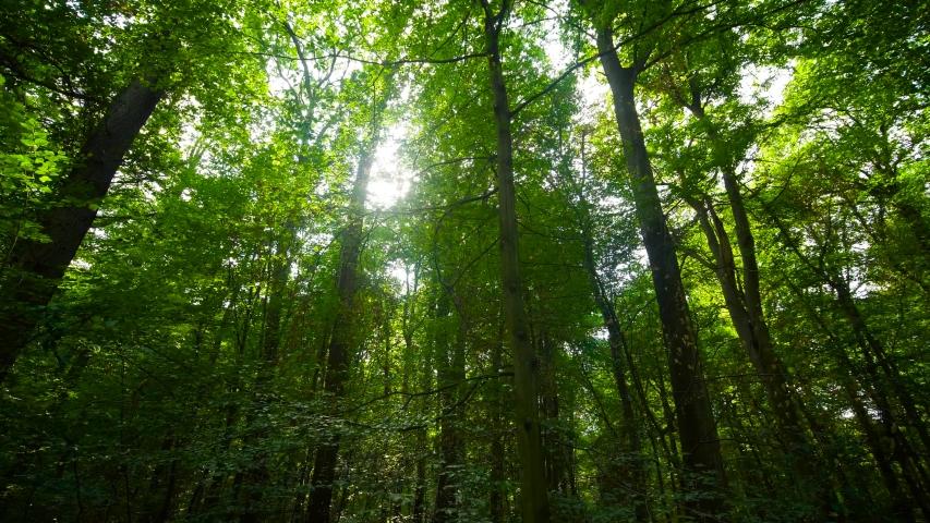 Sunbeams through trees in deep forest | Shutterstock HD Video #1035858434