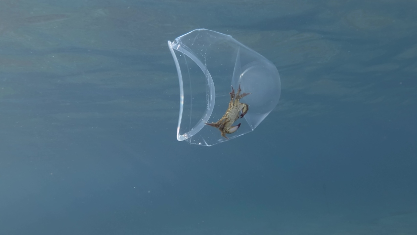 Plastic pollution, Crab travels inside a plastic cup slowly floating under the surface of blue water in sunray. Live crab trapped in plastic cup.  Mediterranean Sea, Plastic garbage   | Shutterstock HD Video #1035888791