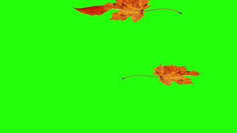 Similar Stock Videos Of Autumn Or Fall Leaves Falling On Green Screen 1020825826 Shutterstock