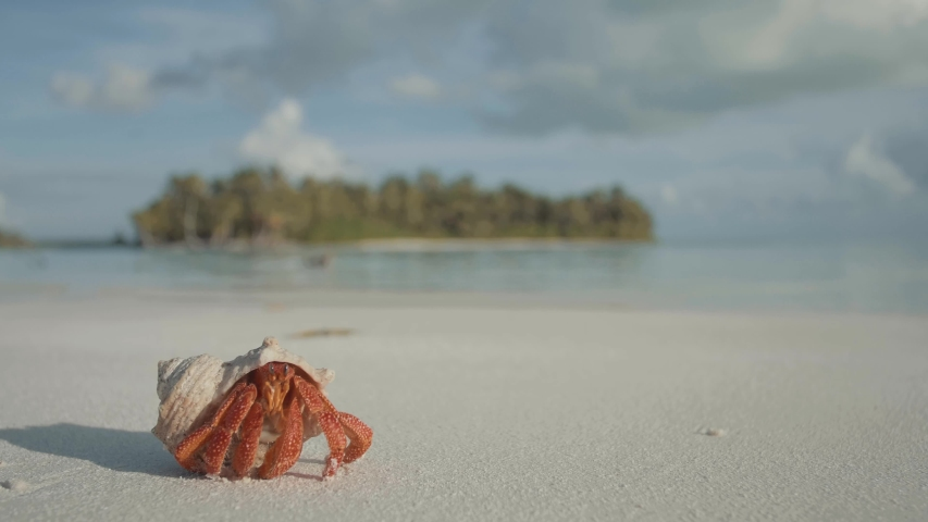 Hermit crab in Paradise cocos islands | Shutterstock HD Video #1036020593