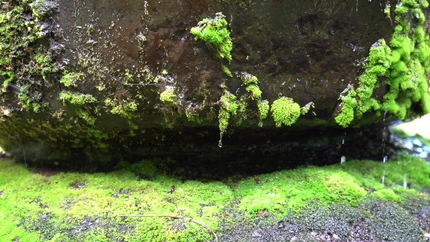 Water drop on mossy stone; 4k; beauty nature; | Shutterstock HD Video #1036020782