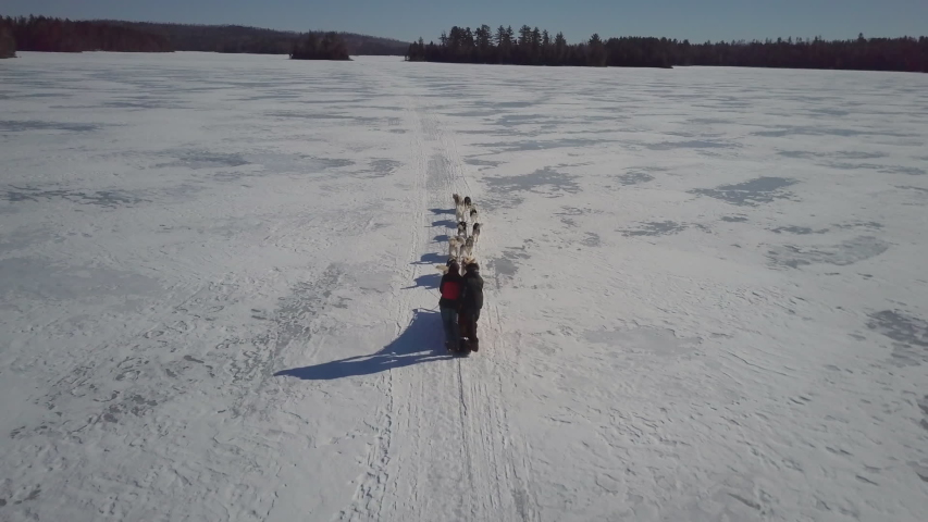 Dogsledding wilderness adventure, through the snow