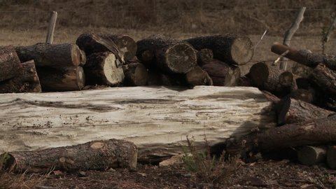 Wood Pile Stored in a Ranch or a Farm.