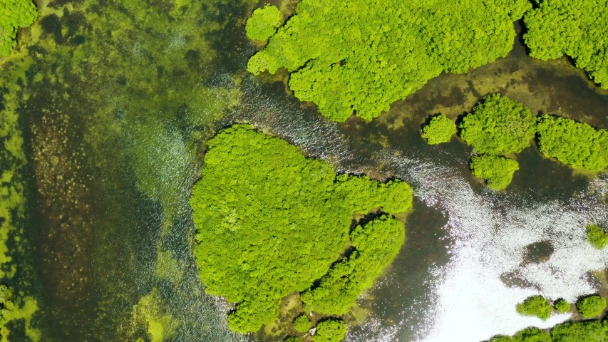 Aerial view of rivers in tropical mangrove forests. Mangrove landscape, Siargao,Philippines. | Shutterstock HD Video #1036432730