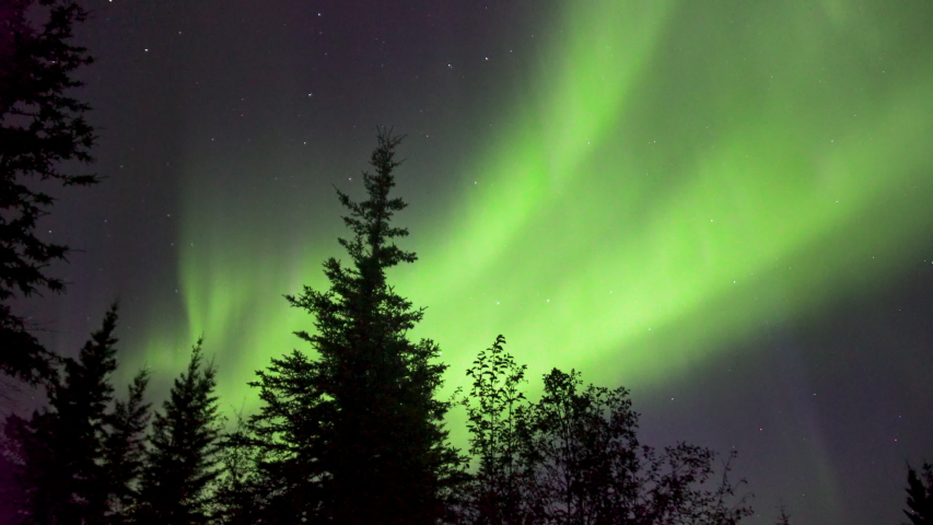 Realistic real time (not timelapse) aurora borealis (northern lights) dancing over trees in Alaska   Shutterstock HD Video #1036463021