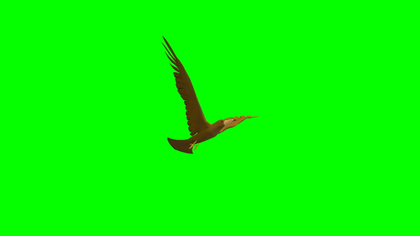 3D animation of bird is flying on the sky loop cycle animation with green background for alpha key light with 3D rendering.   Shutterstock HD Video #1036586171