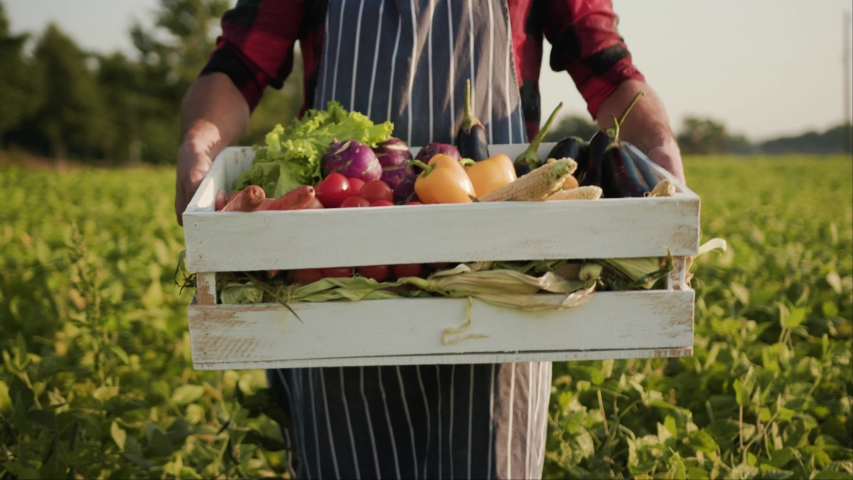 Close up young farmer is holding a box of organic vegetables look at camera at sunlight agriculture farm field harvest garden nutrition organic fresh portrait outdoor slow motion | Shutterstock HD Video #1036597709