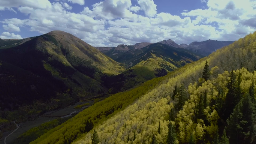 Colorado's Aspen Trees in the Mountains changing to the golden fall colors.