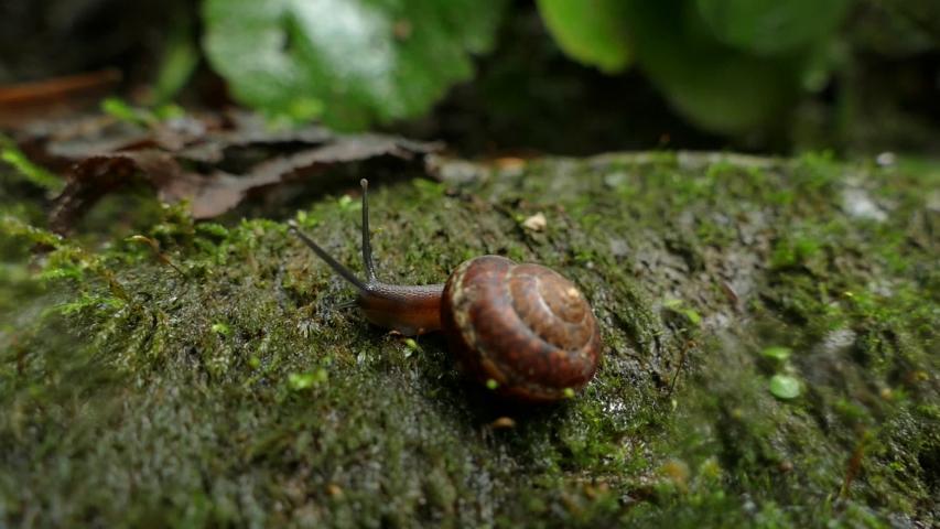 A snail at the foot of the Ivanovsky falls.  | Shutterstock HD Video #1036668530