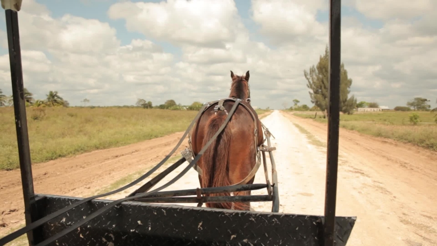 Bacalar, Quintana Roo, Mexico - 09.04.2016. Horse carriage. POV. Horse carriage on the road. Mennonite horse drawn cart.   Shutterstock HD Video #1036808942