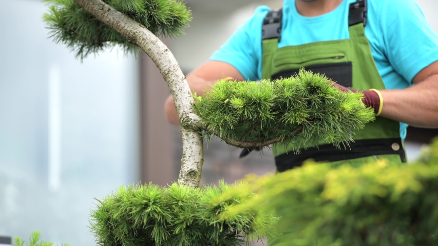 Caucasian Men Trimming Garden Plants. Gardening and Landscaping Industry. | Shutterstock HD Video #1036833950
