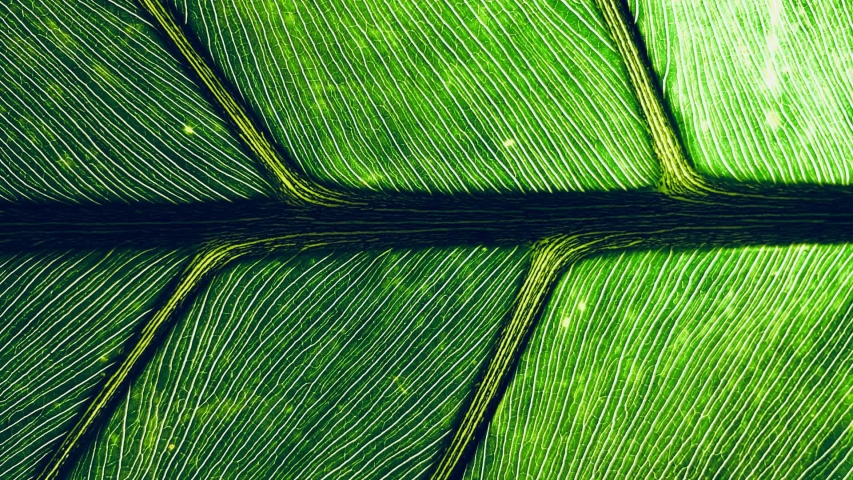 Looping Cinemagraph macro of green leaf background