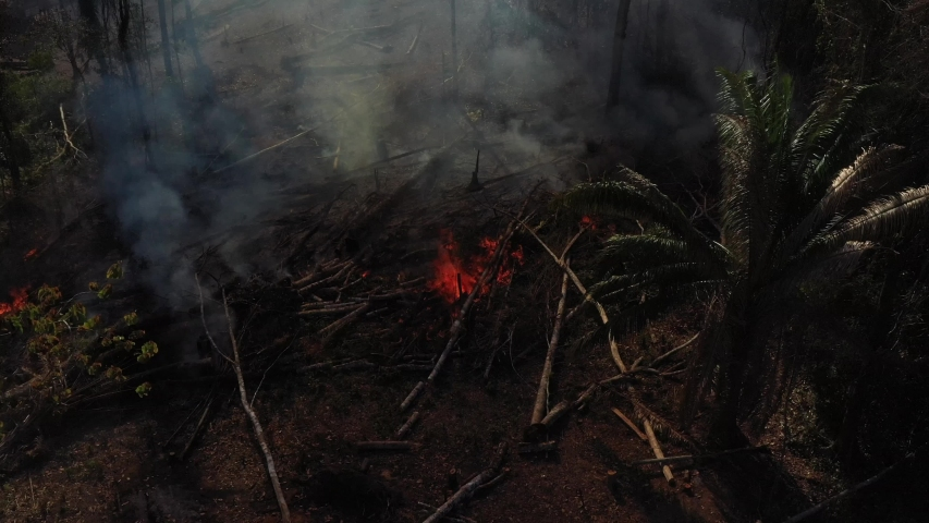 Burning foliage in the Amazon rainforest. Slowement forward, high angle | Shutterstock HD Video #1036839293