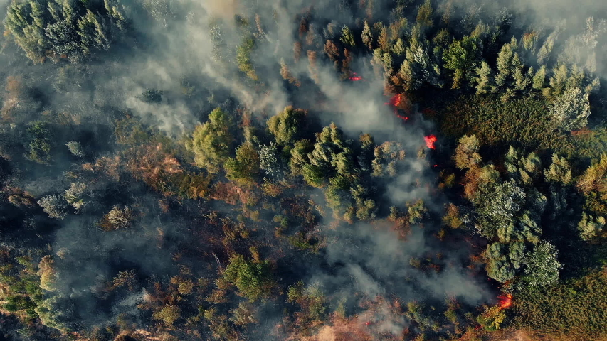 Top view of a fire erupted in the forest | Shutterstock HD Video #1036881398