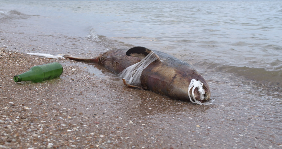 Dead young dolphin on the sea shore. Earth wildlife, environmental pollution, ecological catastrophe. Dead animal.